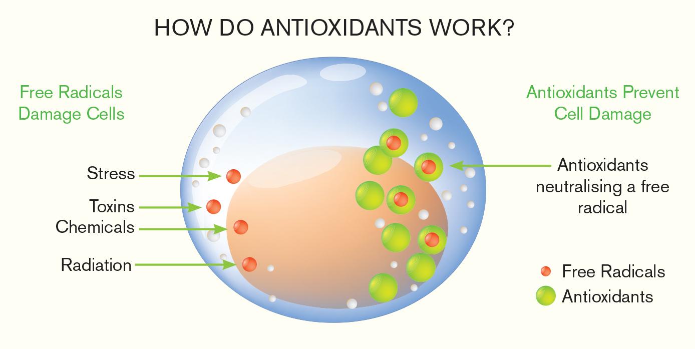 antioxidants-v2.jpg